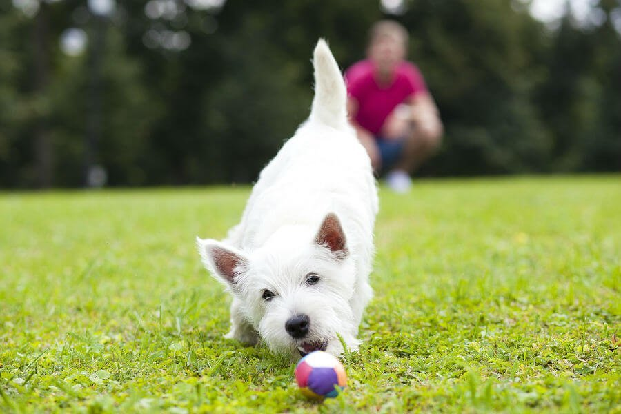 Cute dog playing in field with ball