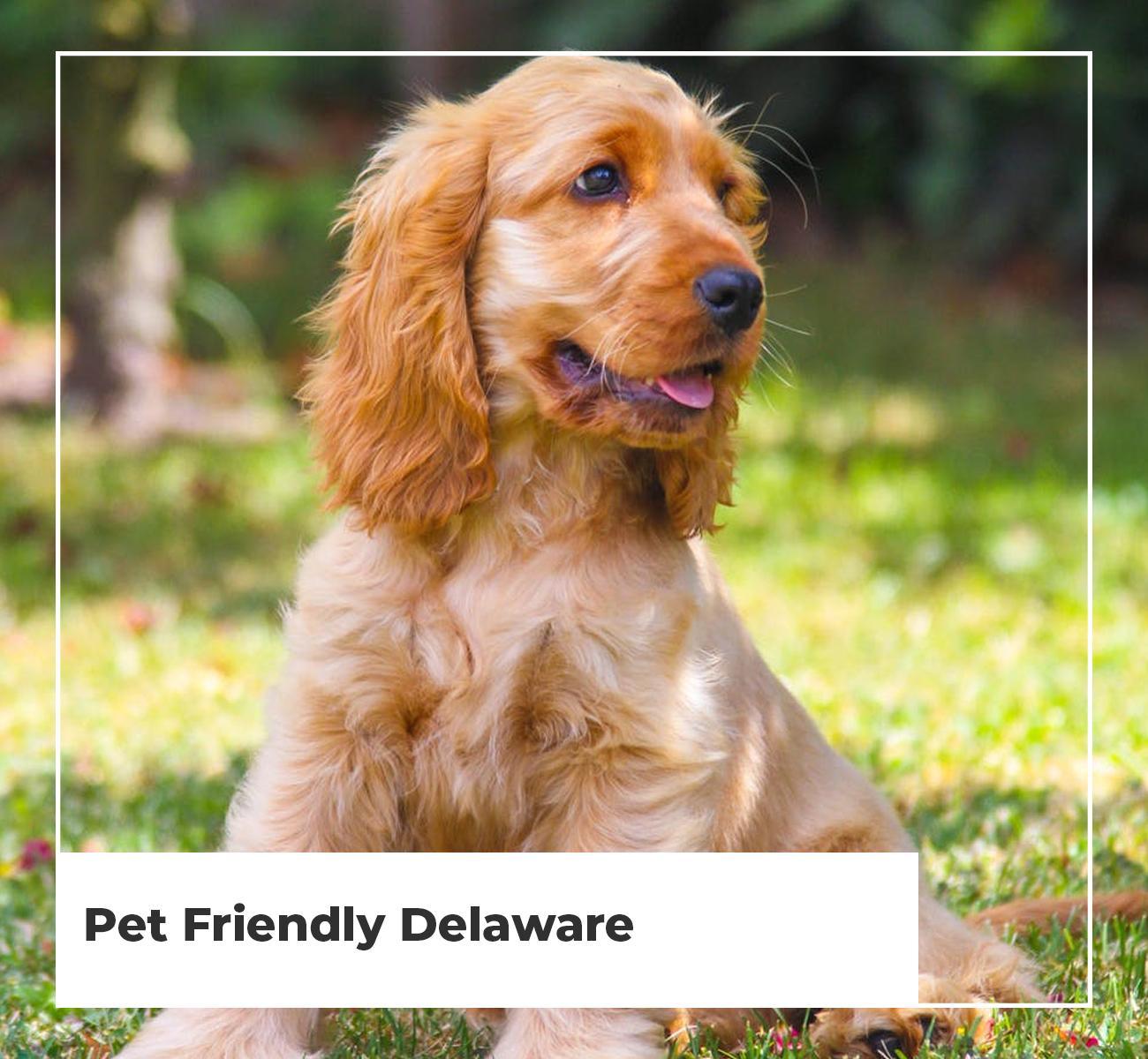 Pet Friendly Delaware