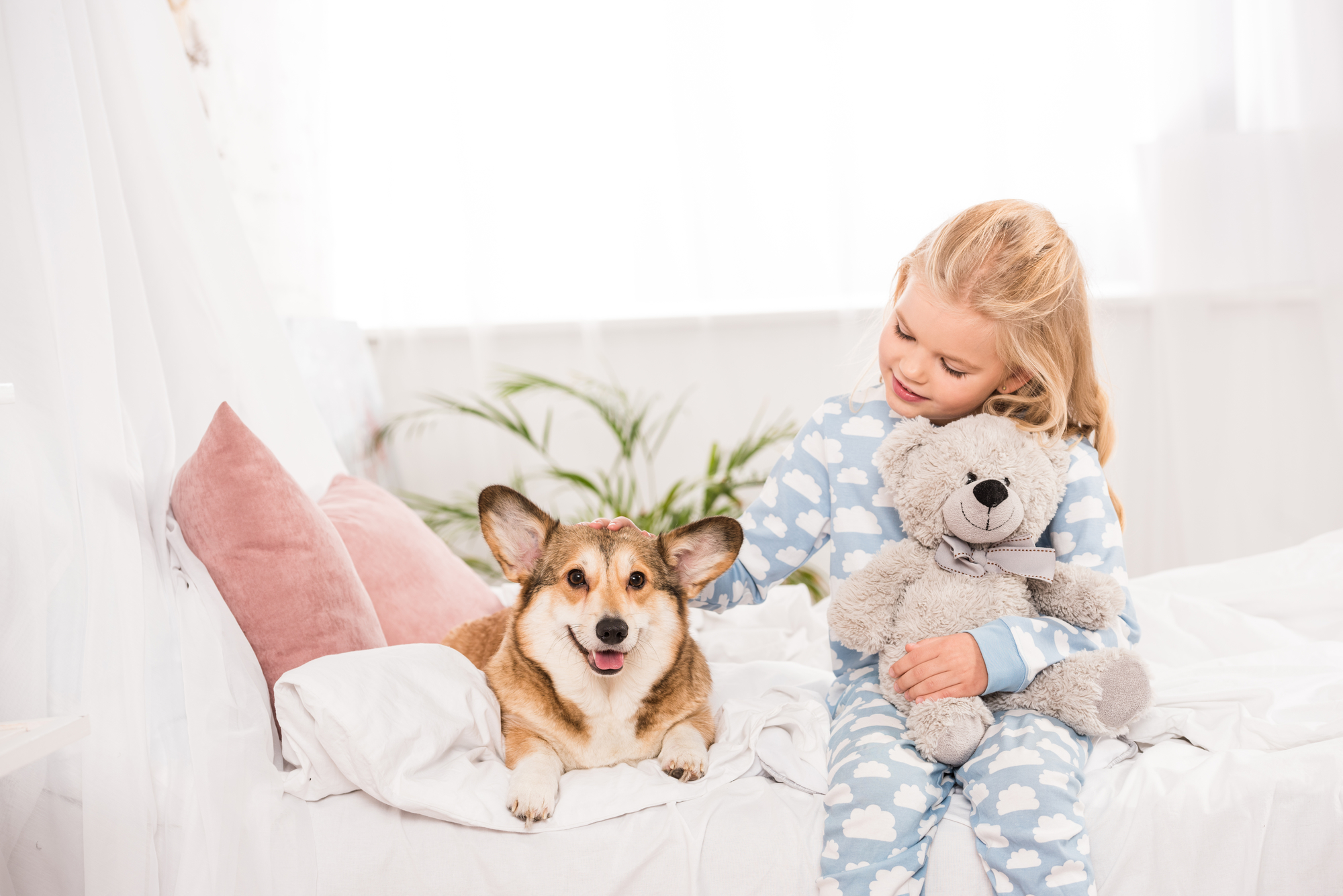 In the hearts of canine owners dogs are part of the family historically a person who shares a home with a pooch had to make interior design sacrifices