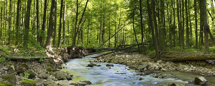 flamborough trails