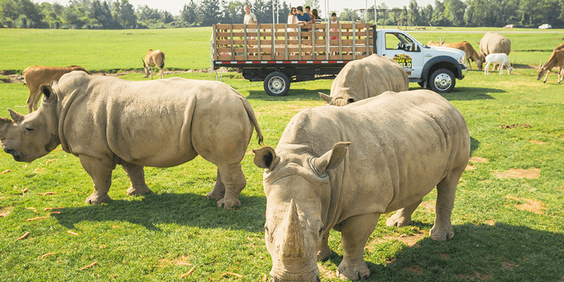 Things to do african lion safari hamilton ontario