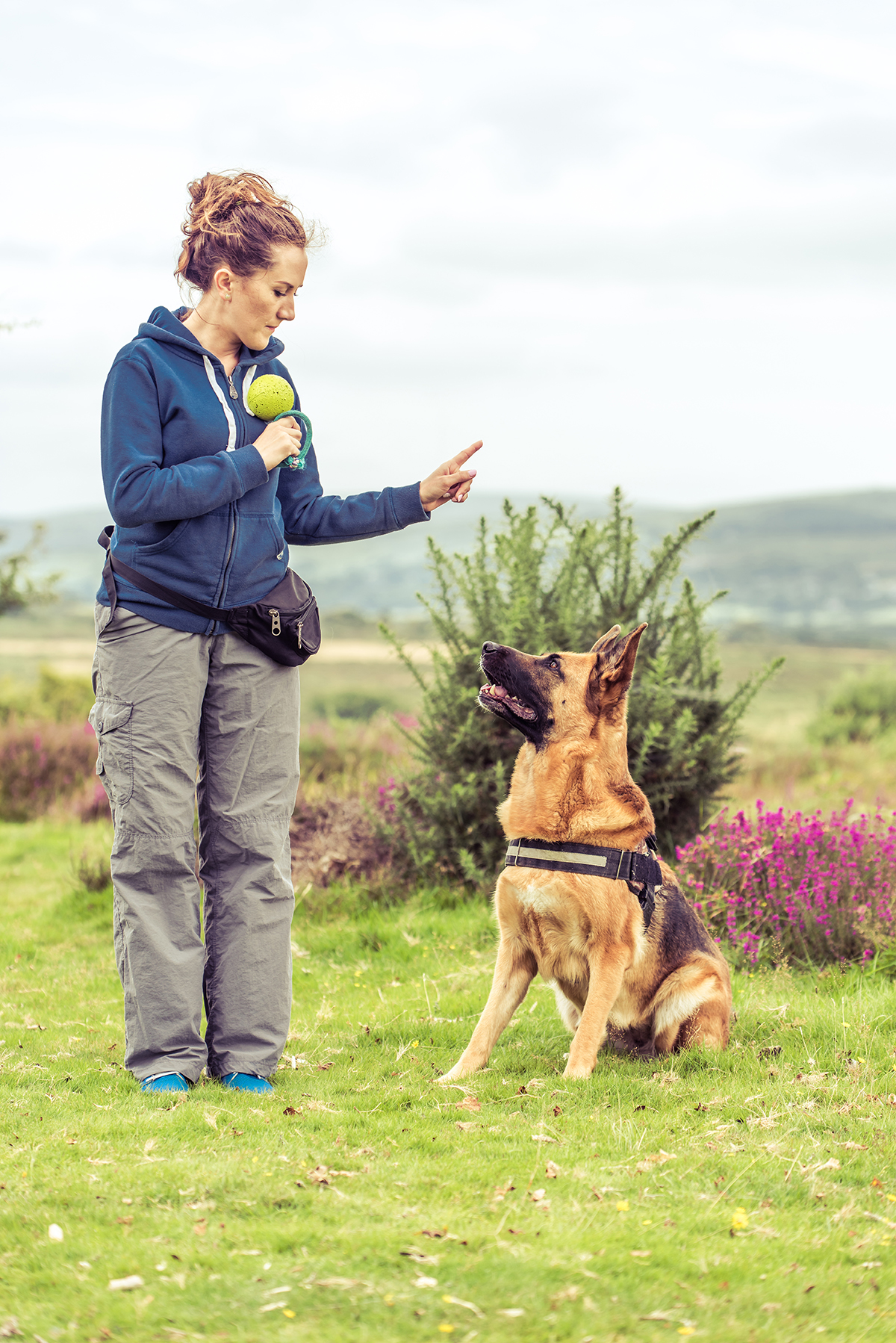 Dog trainer with German Sheppard