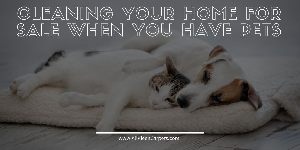 cleaning pets when your house is for sale