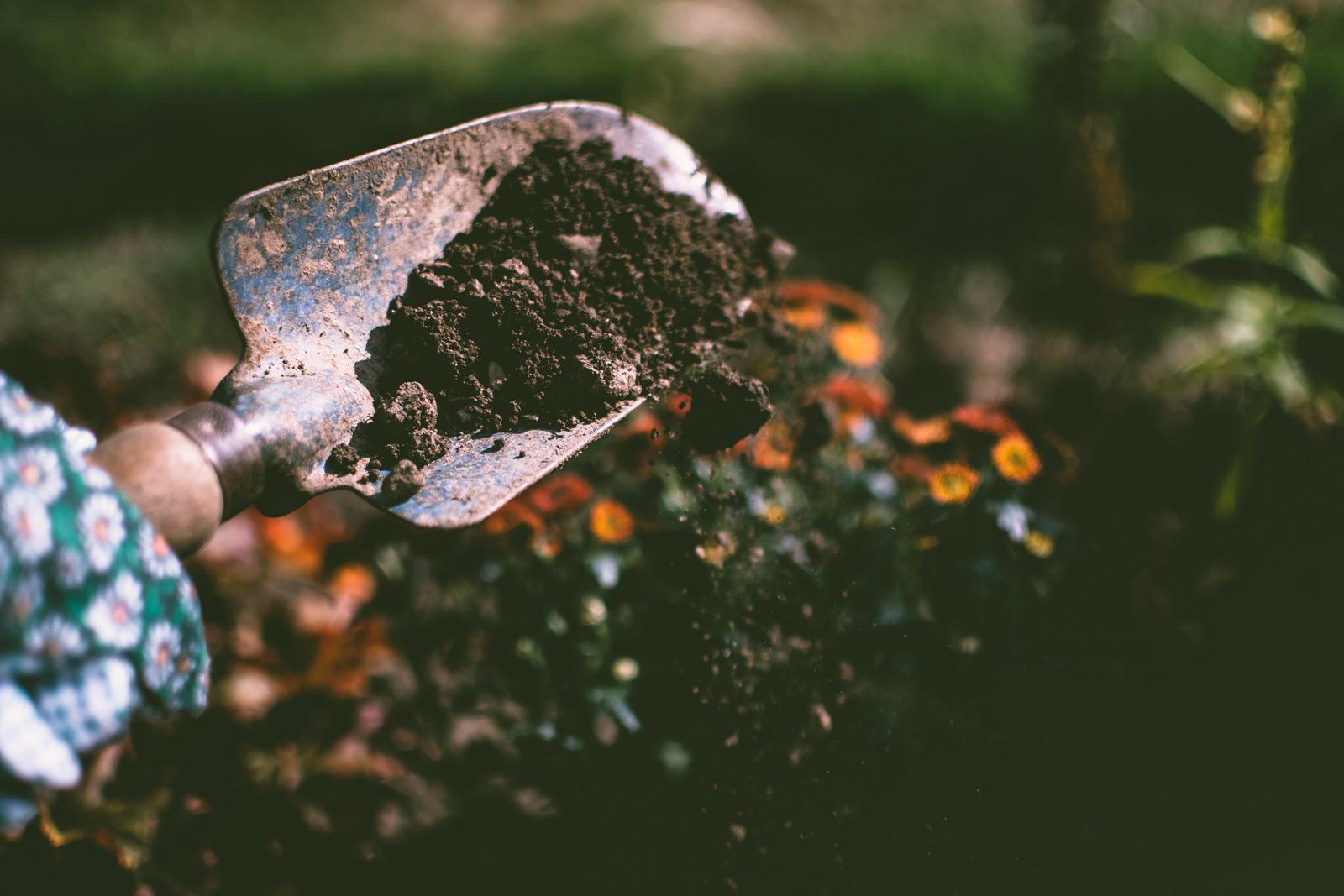 5 Backyard Gardening Tips for Spring