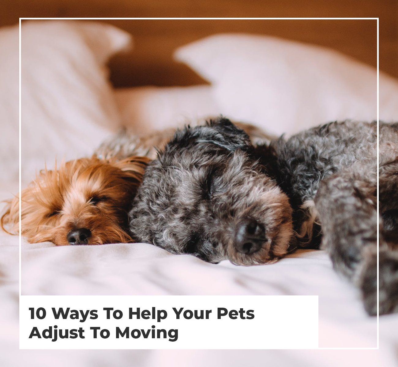 10 Ways To Help Your Pets Adjust To Moving
