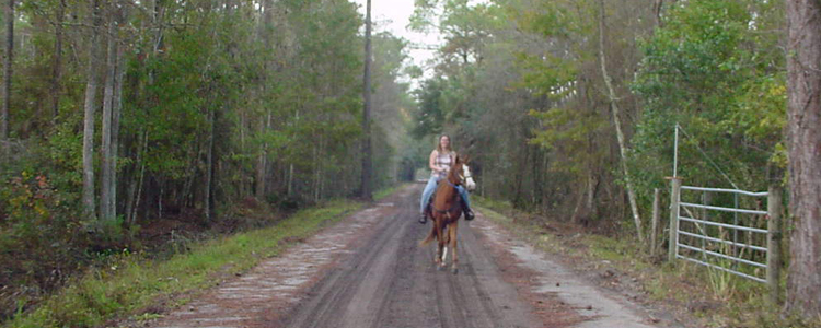 Horse Back Riding Ormand Beach