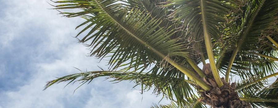 Moving to Palm Coast