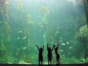 Sea Life Grapevine Mills Mall