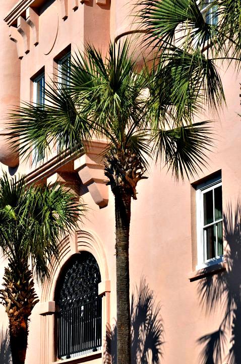 Charleston Palm Tree
