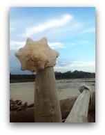 Edisto Island SC Beach Shell