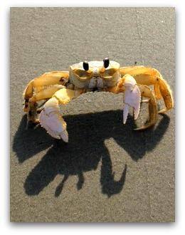 Isle of Palms SC Beach w/ Crab