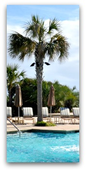 Kiawah Island SC Resort Pool