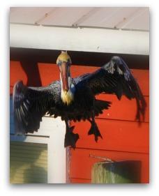 Pelican on Shem Creek, Mt. Pleasant SC