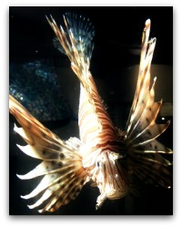 SC Aquarium Fish