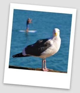 Seagull on Sullivan's Island SC