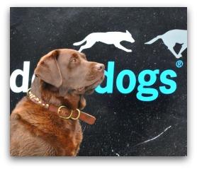 Dock Dogs in Charleston SC