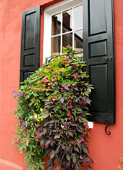 Charleston SC Window Box