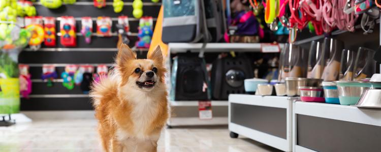 Pet Store Chicago