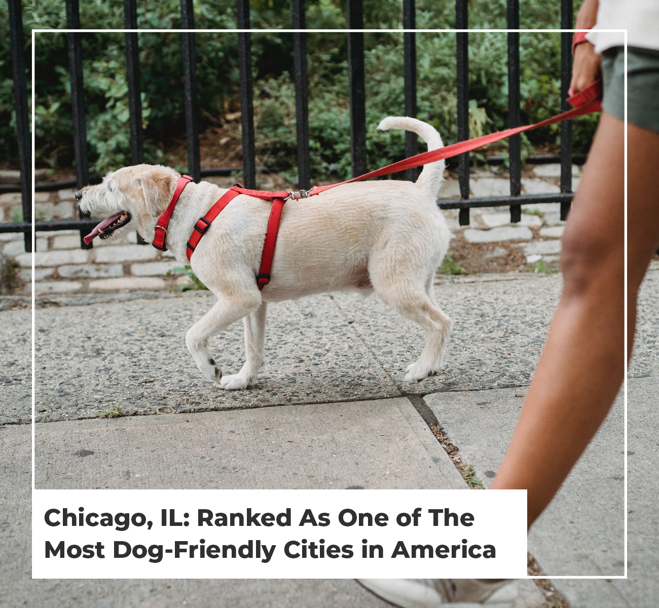Chicago Rated Most Dog Friendly City