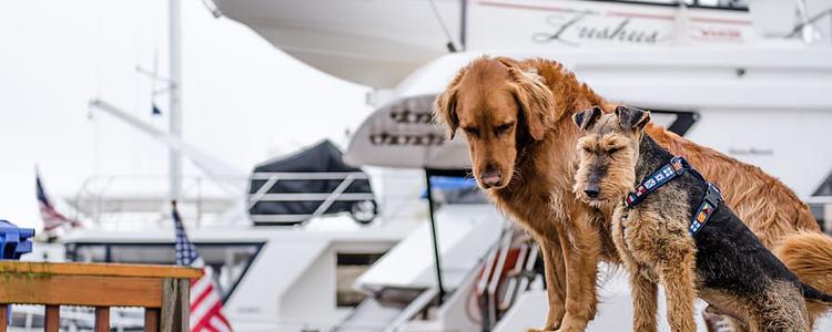 Things To Do, Mercury's Canine Cruise