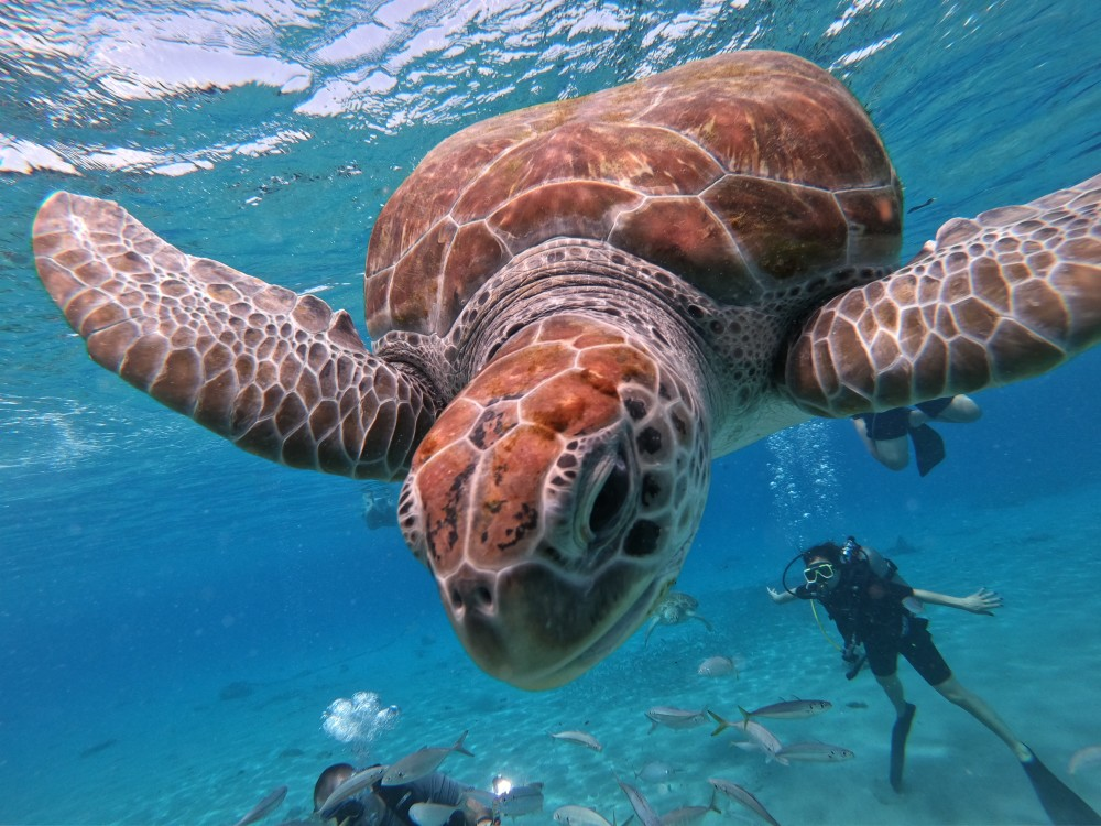 Living In Harmony with Sea Turtles in a Beach Front Home on Captiva Island