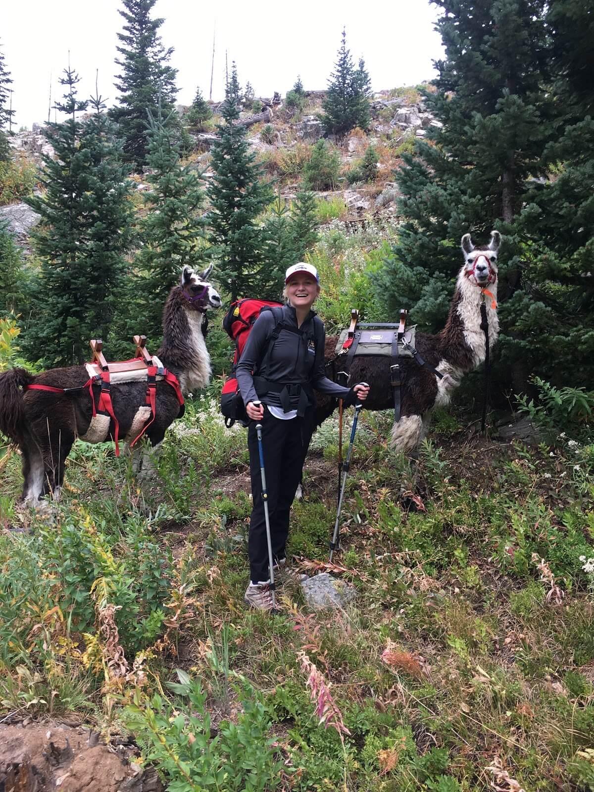 Hiking with llamas in Steamboat Springs Zirkel Wilderness