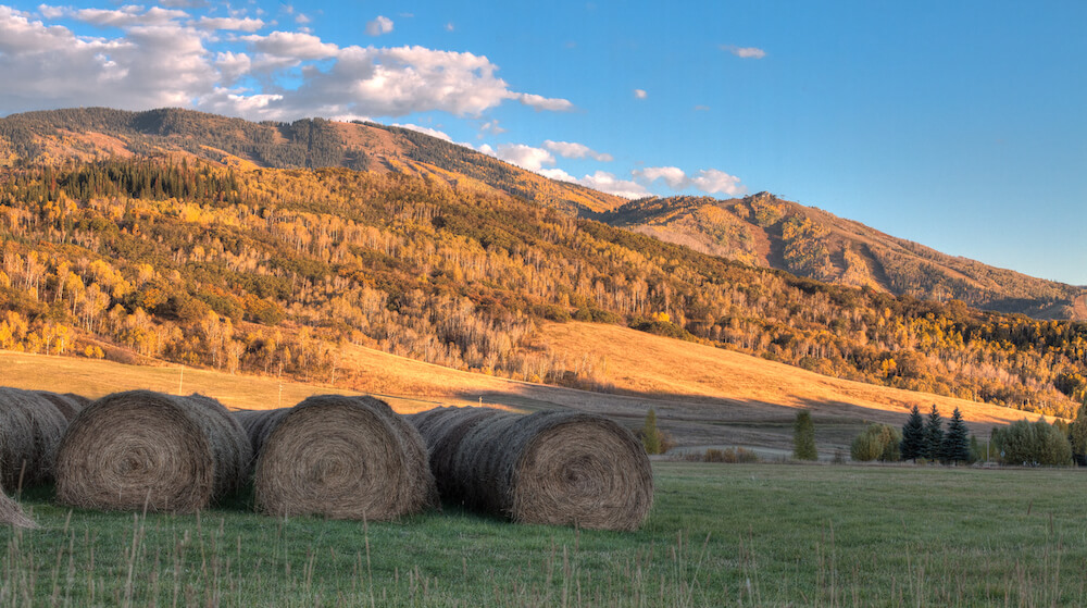 Fall foliage on mountain tops in Steamboat Springs CO