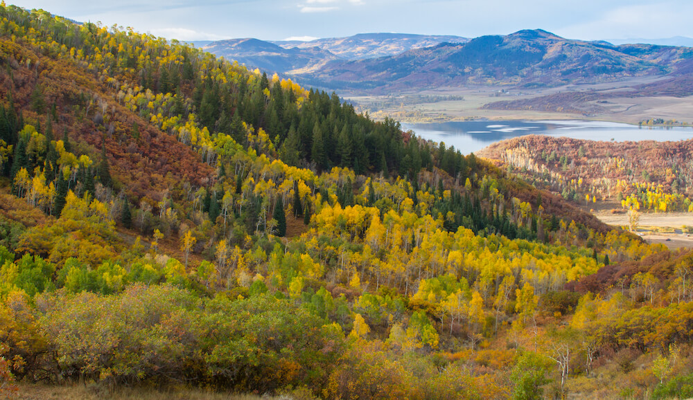 Colorful fall foliage in Steamboat Springs