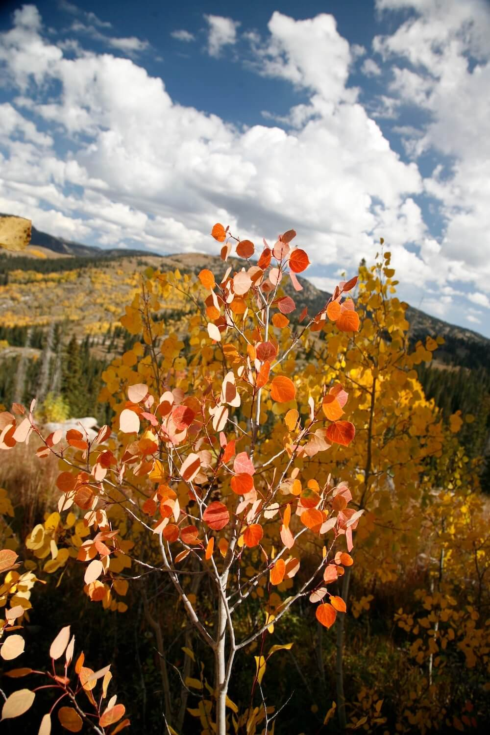 Mountain hiking in Steamboat Springs
