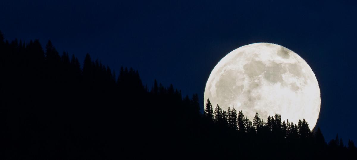 Full Moon Over Trees in the Dark Night Sky in Steamboat Springs Colorado