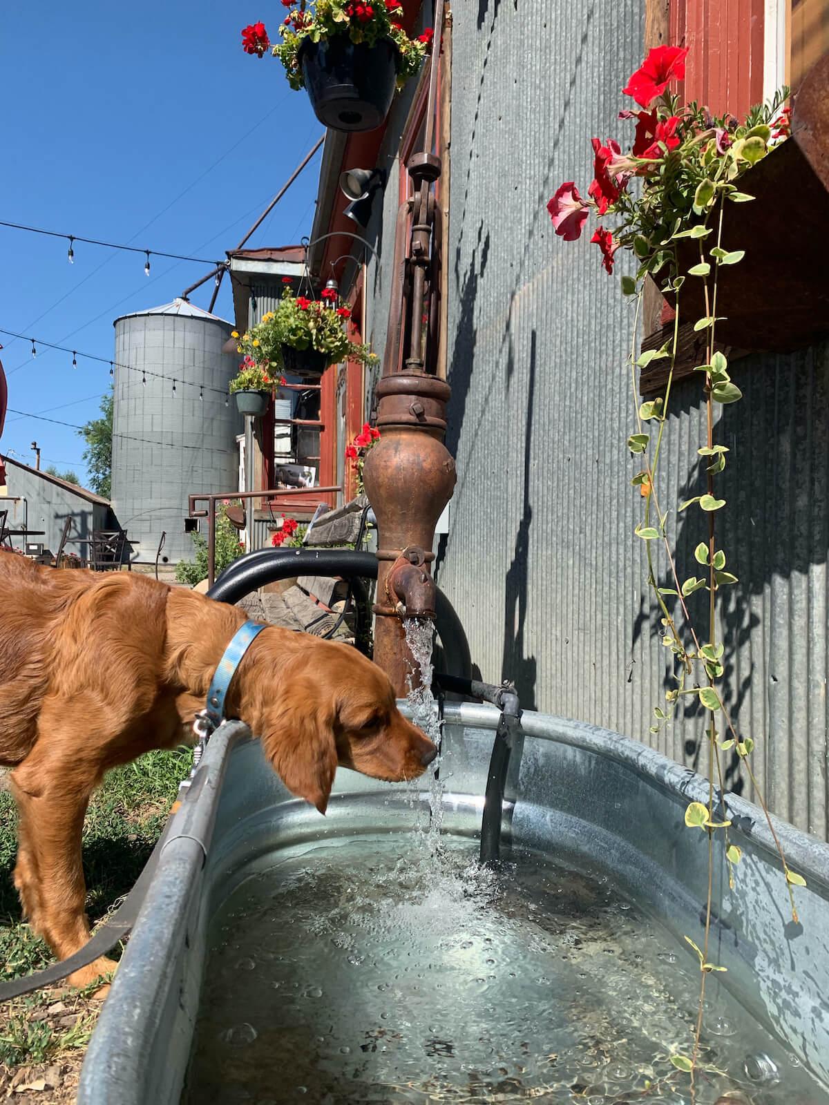 Steamboat Springs Dog Friendly Study Spot Hayden Granary