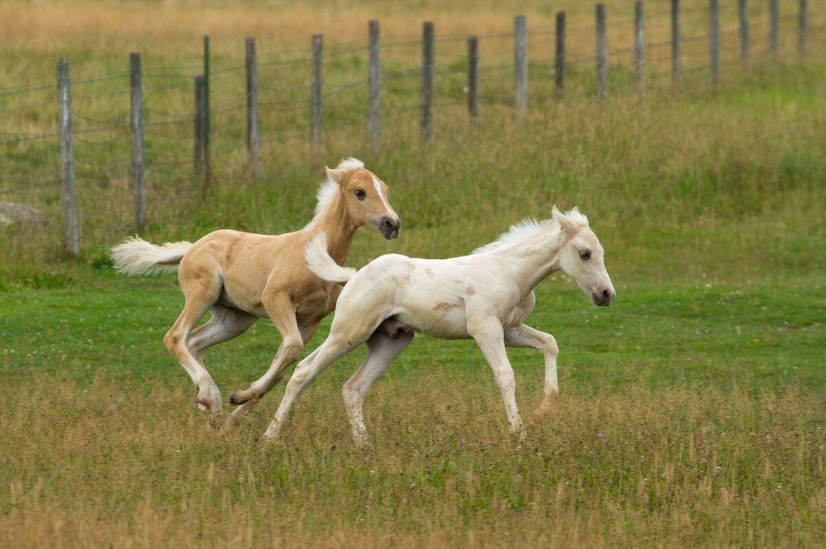 Horses in Steamboat Springs