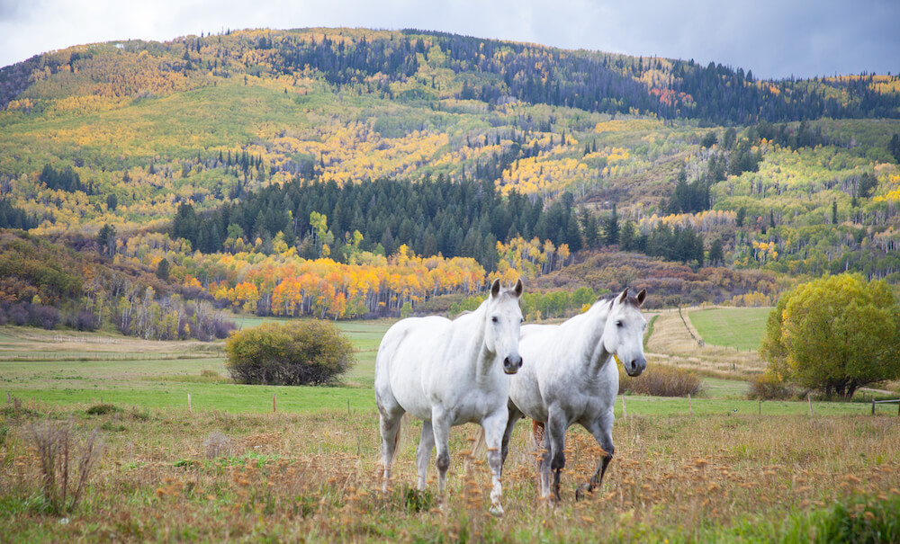 Mountains in Autumn in Steamboat Springs CO