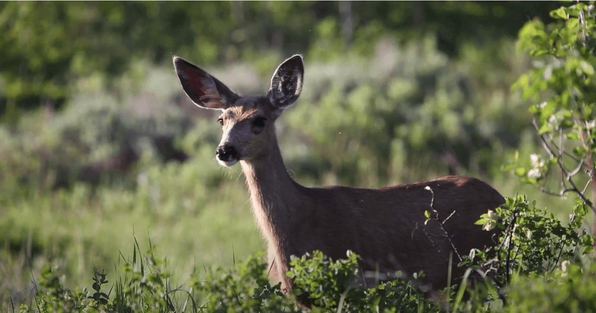 Wildlife in Steamboat Springs CO