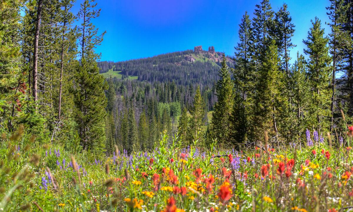 Summertime in Steamboat Springs Colorado