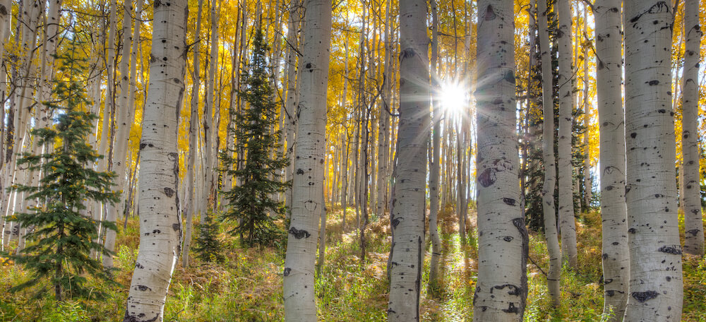 Sunlight through fall trees Steamboat Springs