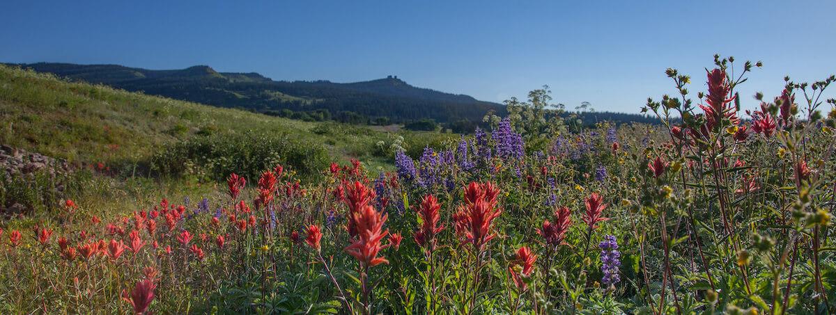 Steamboat Springs Best Wildflower Hiking