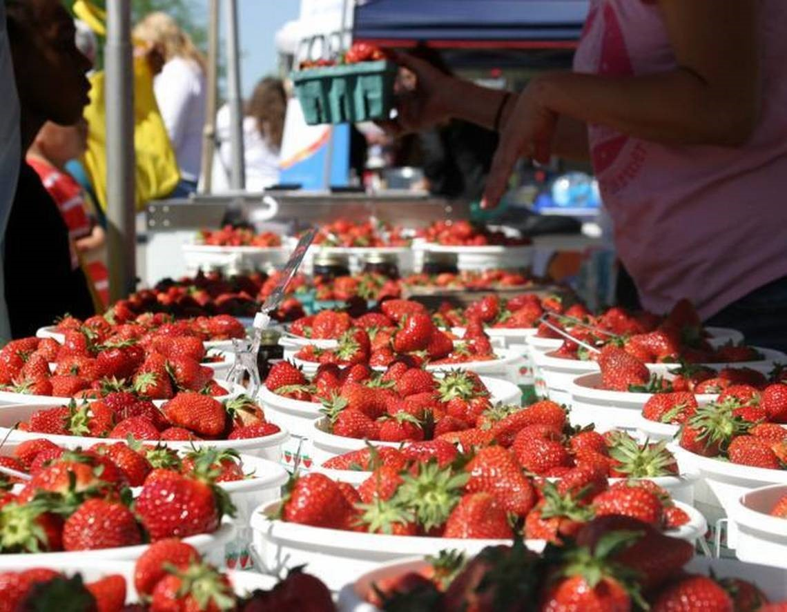 Strawberry Festival in Garner North Carolina - White buckets filled with red strawberries