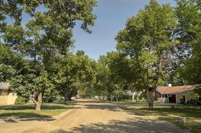 Goodman Neighborhood Trees and Homes in Durango Colorado