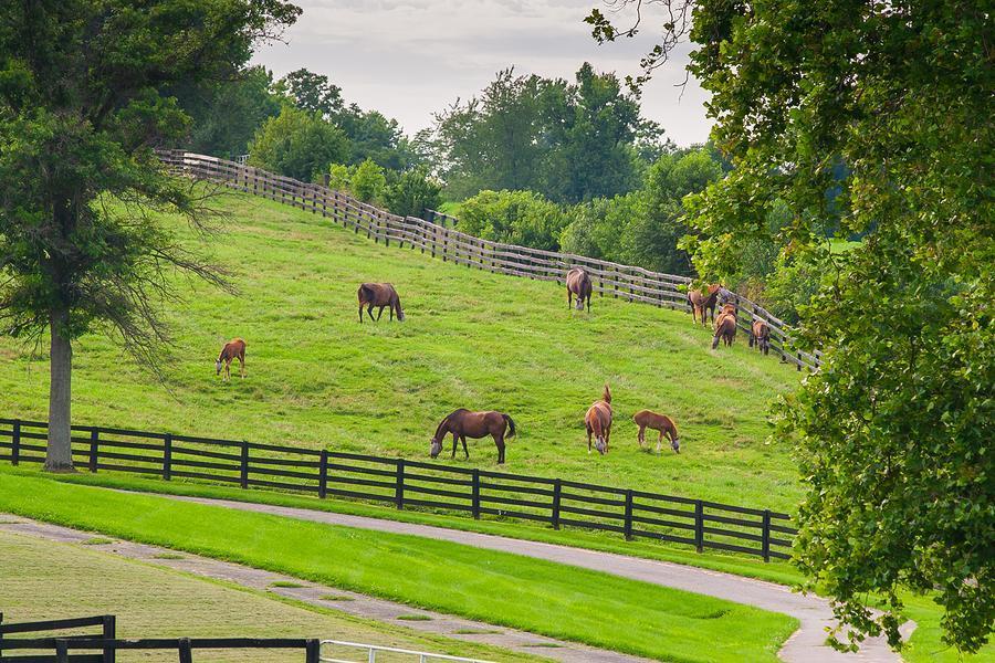 Durango Horse Farms For Sale