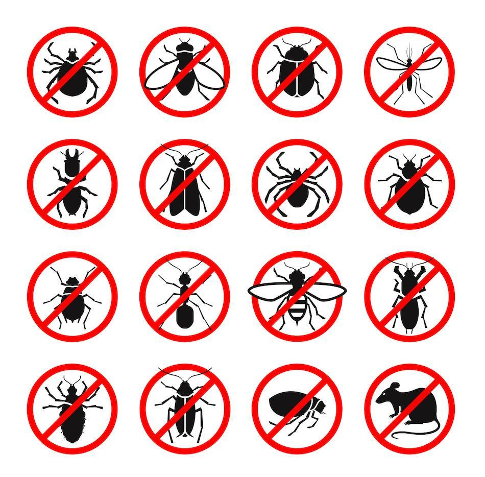 How To Remove Pest From Your Home