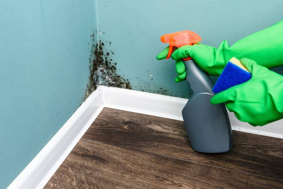 What to Do If You Find Mold in the Home