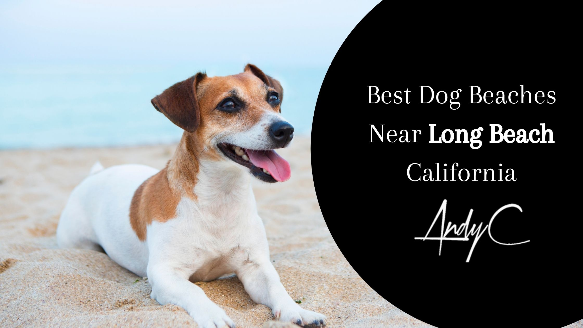 Best Dog Beaches Near Long Beach California