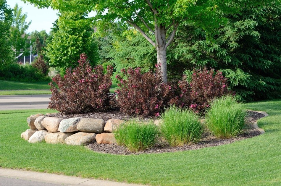 4 Traits to Avoid When Planting a Tree