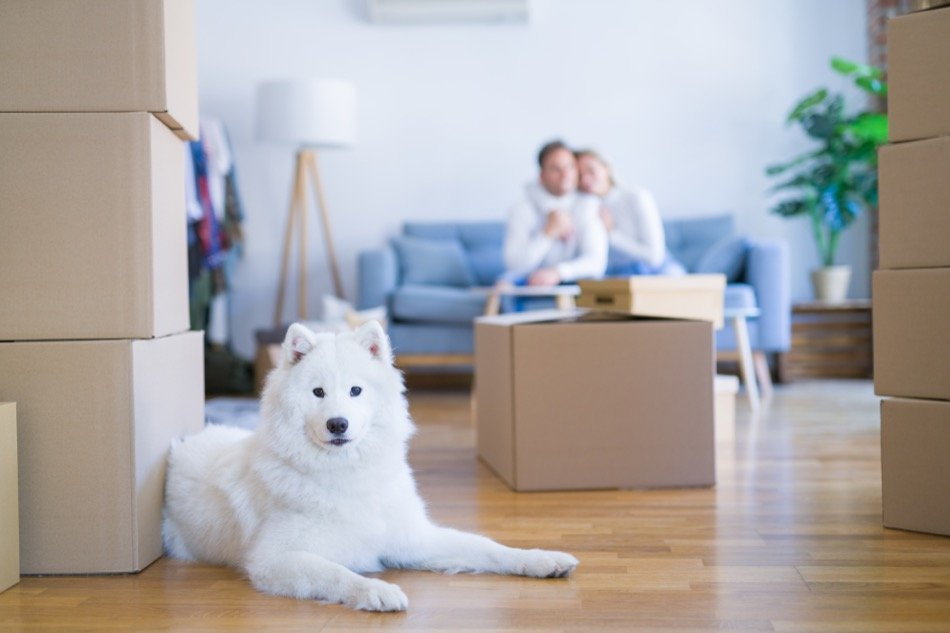 3 Tips for Moving into a New Home With Pets
