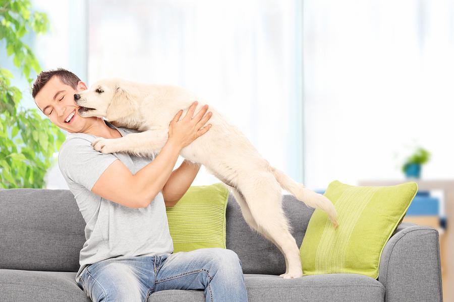 Search Dog Friendly Condominiums in Las Vegas