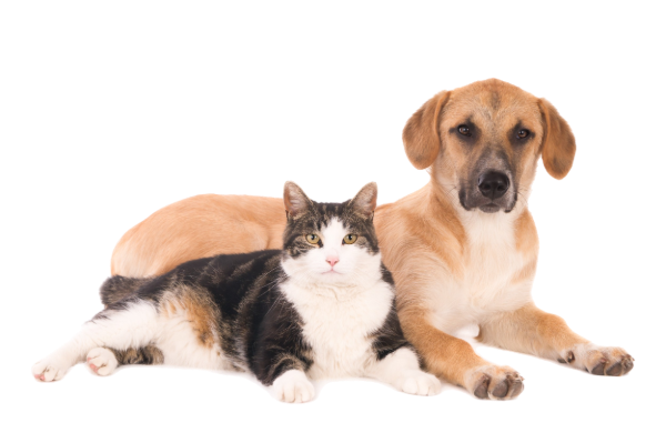 Managing Pets During a Home Sale