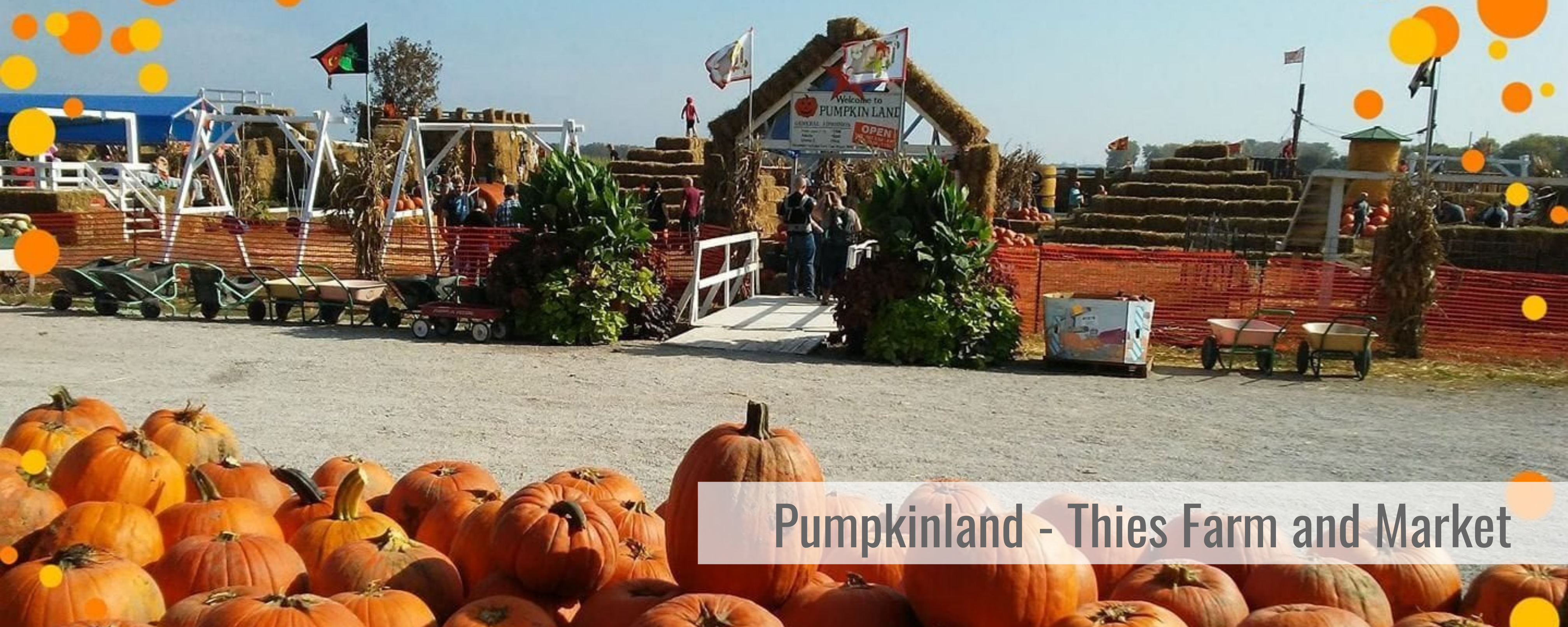 Thies Farm and Market Pumpkinland