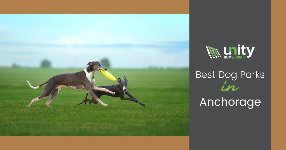 Best Dog Parks in Anchorage