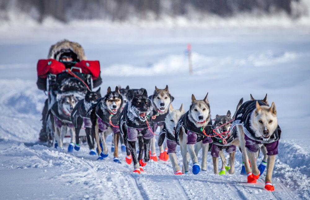 Iditarod Dog Sled Race in Anchorage, AK